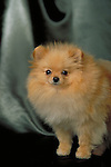 pomeranian Shopping cart has 3 Tabs:<br />