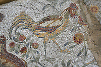 Detail of a mosaic depicting a cock in the Villa of the Aviary, Carthage, Tunisia, pictured on January 27, 2008, at noon. Carthage was founded in 814 BC by the Phoenicians who fought three Punic Wars against the Romans over this immensely important Mediterranean harbour. The Romans finally conquered the city in 146 BC. Subsequently it was conquered by the Vandals and the Byzantine Empire. Today it is a UNESCO World Heritage. The Roman Villa of the Aviary, with its octagonal garden set in a peristyle courtyard, is known for its fine mosaics depicting birds. Picture by Manuel Cohen.