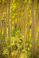 Park City, Utah USA area fall scenics