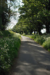 English country lane in spring, showing spring flowers on the road side, North Yorkshire, England.