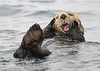 Great Bear Rainforest 2016 Wildlife & Scenery