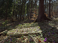 FOREST_LOCATION_90208