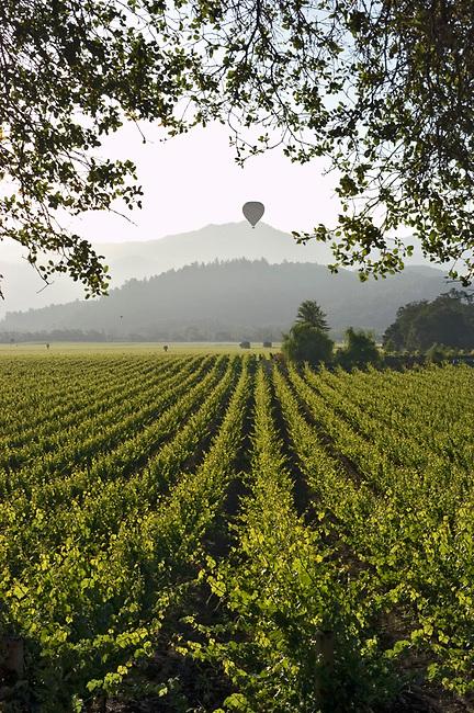 Balloon over vineyard