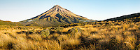 Alpine fields of tussock with Taranaki, Mt. Egmont in background, Taranaki Region, Egmont National Park, North Island, New Zealand, NZ