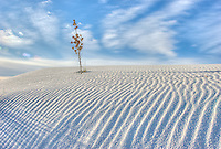 As I was photographing, I noticed this agave plant covered by the ever changing dunes at White Sands National Monument.  Just the dried flower stalk is above the sand creating an image of simplicity and change, a HDR image.