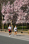 New York City, New York: Spring time with blossoms in Central Park  .Photo #: ny268-14731  .Photo copyright Lee Foster, www.fostertravel.com, lee@fostertravel.com, 510-549-2202.