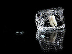 A tooth set in an ice cube