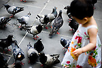 Young girl looking down at pigeons in the street