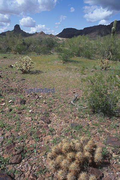 Sonoran Desert, Arizona, USA.