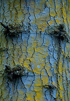 Tree Bark and Lichen, Cama Beach State Park, Camano Island, Washington, US