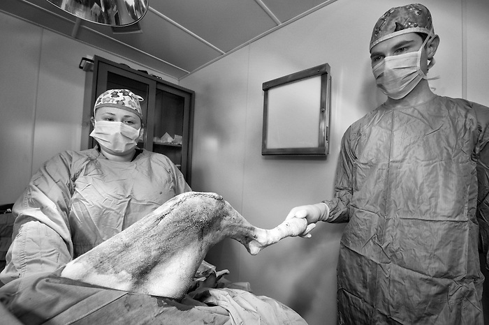 Doctors holding the leg of a dog that was operated on
