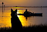 Dixie the border collie watches a fisherman in his kayak at Shell Point beach in Wakulla County, Florida.