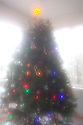 WA07282-00...WASHINGTON - Christmas tree.