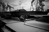 Szczecin 17 July 2008 Poland.<br /> The Szczecin shipyard.<br /> The Polish shipyard industry is in a deep crisis. The Gdansk and Szczecin shipyards are under the threat of liquidation. The battle between the Polish government, creditors and European Union rages on. Spyard workers live under immense pressure of dissmissals. They are completely unsure of their future; they leave, search for work in England, Irland, Norway. During last two months over 25 % of workers left the Szczecin shipyard. The trade union Solidarnosc, with its cradle shipyard in Gdansk fought for free Poland 27 years ago. Today it fights for the survival of the shipyard.It organizes manifestations and pickets.<br /> A ghast feeling of emptiness in most of the shipyard's sectors remains after all workers leave for home at 2 pm, leaving the cats and mice at play<br /> ( &copy; Filip Cwik / Napo Images for Newsweek Poland )<br /> <br /> Szczecin 17 lipca 2008 Polska.<br /> Polski przemysl stoczniowy pograzony jest w glebokim kryzysie. Stoczniom z Gdanska i Szczecina grozi likwidacja. Gra sie toczy pomiedzy Polskim rzadem, wierzycielami a Unia Europejska. Stoczniowcom groza zwolnienia grupowe. Nie sa pewni przyszlosci; odchodza, wyjezdzaja do Anglii, Irlandii, Norwegii.  W ciagu dwoch miesiecy ze stoczni Szczecinskiej zwolnilo sie 25% pracownikow. Zwiazek zawodowy Solidarnosc, ktorej kolebka jest zaklad w Gdansku 27 lat temu walczyl o wolna Polske, dzis walczy o utrzymanie zakladu pracy. Organizuje protesty manifestacje i pikiety.<br /> <br /> ( &copy; Filip Cwik / Napo Images dla Newsweek Polska )