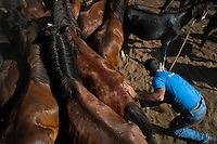A villager fights wild horses in the curro during the Rapa das Bestas (Shearing of the Beasts) festival in Torroña, Spain, 5 June 2011. The herds of of wild horses roam freely the hills of Galicia in the north-western Spain. Each year, in the beginning of summer, villagers herd horses down from the higher ground, rounding them up in the curro, a centuries-old stone arena. Here, ranchers catch the animals one by one and shear their manes and tails. Some of the young men, showing up their strength and courage, fight the untamed horses just with their bare hands. At the end of Rapa das Bestas, a 400-year-old Spanish tradition, the newborn foals are branded and all horses are released back into the wilderness.