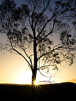 The sun looks like a star as it rises along the base of a silhouetted tree in Waikoloa, Big Island.