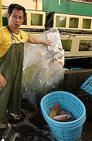 Hong Kong Lei Yue Mun Fish Market
