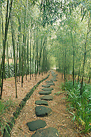 At the Bamboo Park, a pathway with dark stones sets a mystical and peaceful tone in a bamboo grove.