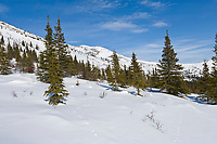 Animal tracks in the snow covered tundra of the White Mountains National Recreation Area, interior, Alaska