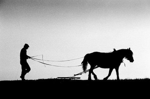 Hungary. Farmer wearing a cap driving his horse drawing a chain harrow in silhouette against a back light.