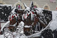 Vienna in the Snow