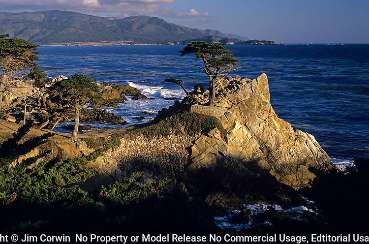 Lone Cypress at sunset over Pacific ocean along 17 mile drive Monterey California USA