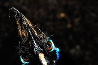 Hard stare from a Cassowary. Sydney, Australia
