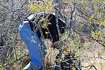 David Trying To Make Way Through Spiny Bushes