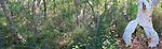 Unusual tree, Kincumba Mountain, NSW