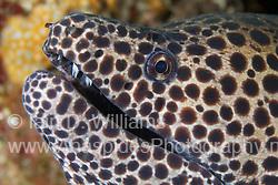 Corcodile, Snake & Moray Eels