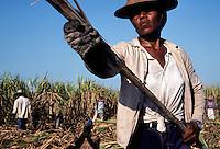 Cuban Sugarcane