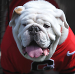 Georgia mascot Uga at Vaught-Hemingway Stadium in Oxford, Miss. on Saturday, September 24, 2011. Georgia won 27-13.