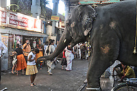 Laxmi, the elephant in front of Manakula Vinayagar temple in Pondicherry.Arindam Mukherjee