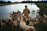 'DUKE OF BEAUFORT HUNT', PROFESSIONAL HUNTSMAN CHARLES WHEELER, FIRST WHIPPER-IN, WALKING THE HOUNDS IN BADMINTON PARK AFTER A MORNING'S HUNTING