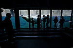 May 12, 2003 - Visitors to the Oregon Zoo in Portland, Oregon, press up to the glass as polar bears entertain with swimming maneuvers about their  watery world.