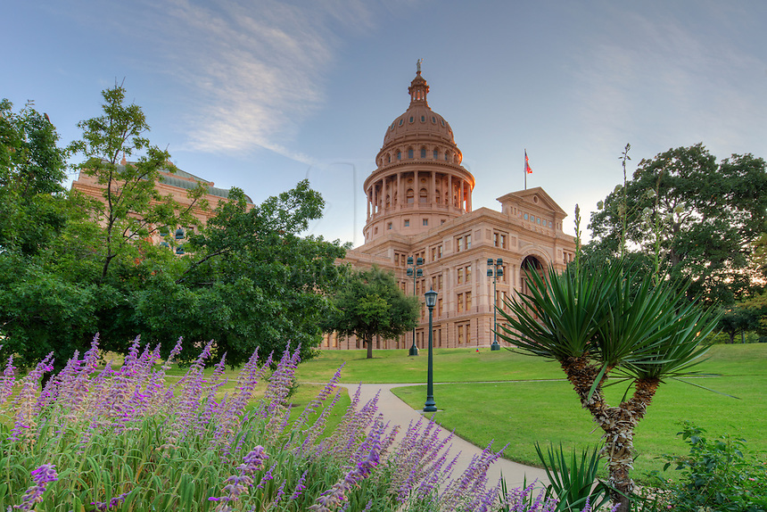 From the south side of the State Capitol in Austin, Texas, purple flowers fill one of the many gardens that rest on the perfectly maicured 22 acres surrounding the historic building.