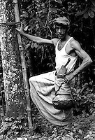 Sri Lanka..Mr. Perera, a Toddy Tapper at Kotmale Valley supplies the Kitul toddy to make treacle and jaggery (sugar)