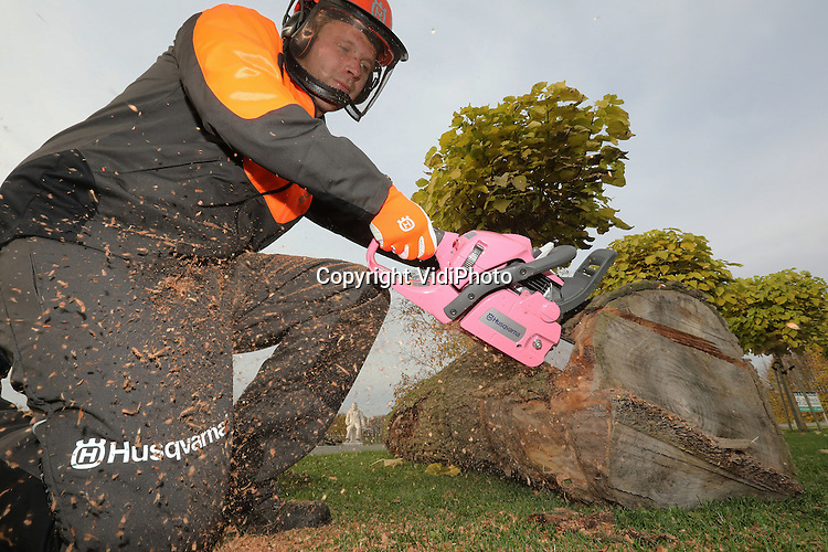 Foto: VidiPhoto<br /> <br /> INGEN- Een echte kerel met een roze kettingzaag. Dat bestaat vanaf maandag. Hendri van Mourik uit Ingen in de Betuwe is de trotse bezitter van de eerste en enige roze kettingzaag in Nederland. Hij kreeg het collecters item maandag overhandigd van de Zweedse producent Husqvarna in het kader van een inzamelingsactie van Pink Ribbon, voor vrouwen die borstkanker hebben of hebben gehad. Via een online veiling konden belangstellenden bieden om de bijzondere kettingzaag te bemachtigen. Dat gebeurde massaal, maar Van Mourik was met 1.125 euro de hoogste bieder. Behalve met de veiling zamelde Husqvarna ook fondsen in met de verkoop van roze speelgoedkettingzagen. De internationale actie werd gevoerd in twintig andere landen.