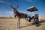 A donkey and cart in the desert outside Siwa Town of the Siwa Oasis, Egypt.