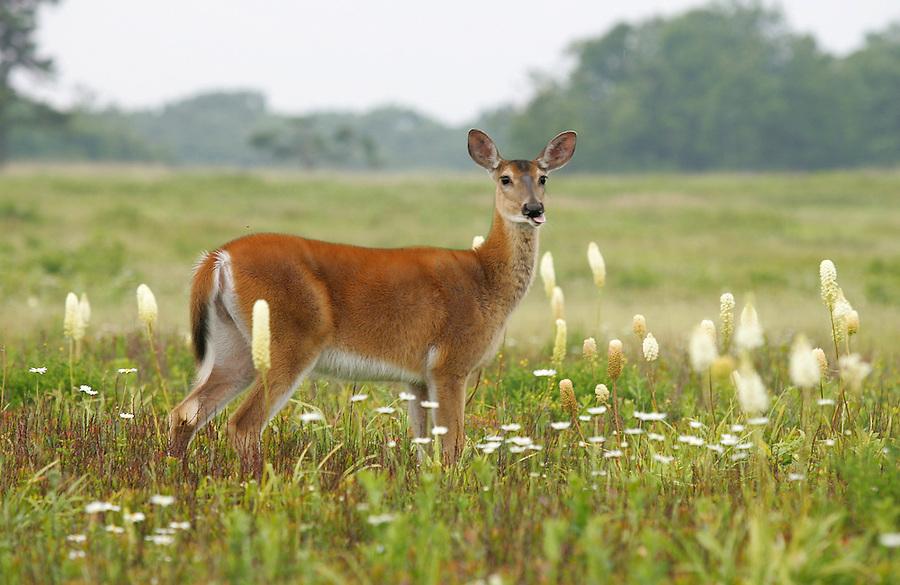 Wildlife in Nelson County, Virginia. Photo/Andrew Shurtleff
