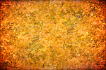 Texture made of maple leaves<br />