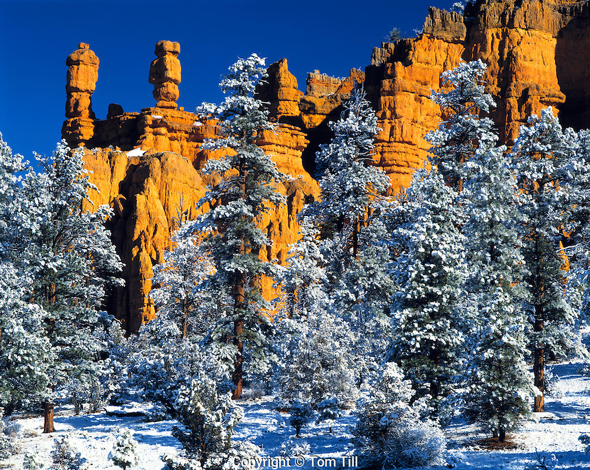 Pinnacles in Spring Snow, Red Canyon, Dixie National Forest, Utah