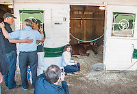 Kentucky Derby winner I'll Have Another tries to take a nap as connections snap photos the morning after his win in the Kentucky Derby at Churchill Downs in Louisville, Kentucky on May 6, 2012.