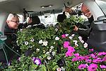 Foto: VidiPhoto<br /> <br /> ROSSUM - Op de eerste dag zaterdag dat plantenkwekerij De Westerbouwing in Rossum de particuliere verkoop van ruim een half miljoen planten en stekjes startte, was het zoals voorspeld direct behoorlijk druk. De afgelopen maanden zijn een half miljoen kleine stekjes opgepot voor de consumentenverkoop, die slechts zes weken duurt. Het bedrijf verkoopt daarnaast nog eens 2 miljoen frambozenstekjes en is proefkweker voor 5000 soorten frambozen. Klanten hierlden zaterdag een stormloop op het uitzonderlijke grote assortiment van 400 verschillende soorten planten, 70 soorten kruiden en 50 soorten groenten. Een diversiteit die &quot;enorm hebzuchtig maakt&quot;, aldus de liefhebbers. Volgens eigenaar Geert de Weert is tuinieren weer enorm populair, met name het eten uit eigen tuin.  Klanten uit heel Nederland reizen af naar de Bommelerwaard om daar unieke soorten planten op de kop te tikken die nergens anders verkrijgbaar zijn. Foto: De familie Eek uit Rosmalen komt ieder jaar op de eerste verkoopdag om maar niets te hoeven missen.
