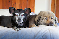 two dogs resting on a bed at home