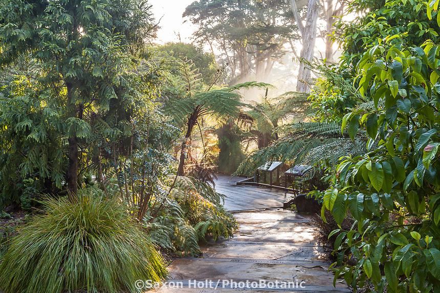 Path in Ancient Plant Garden, San Francisco Botanical Garden