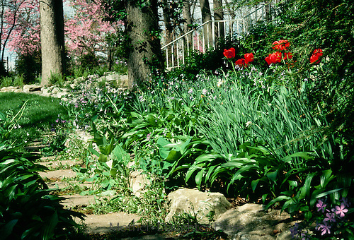 Stepping stones edge the spring garden and the lawn giving a path and a mow edge