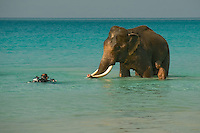 Rajan, an Asian Elephant, Elephas maximus, accompanied by his mahout, or handler, poses for a photographer after enjoying a morning swim. Radhanagar Beach, a.k.a. Beach Number 7, Havelock Island, Andaman Islands, Andaman Sea, India