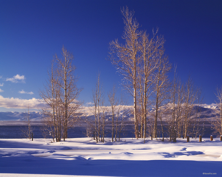 Lake Tahoe Landscape Winter Aspens