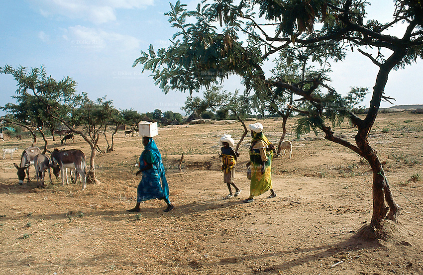Sudan. West Darfur. Kerenek. Two women and a young girl walk home after the food distribution organsied by the non-governmental organization (ngo) Médecins sans Frontières (MSF) Switzerland. They carry  a cardboard and plastic bags full with Unimix flour. © 2004 Didier Ruef